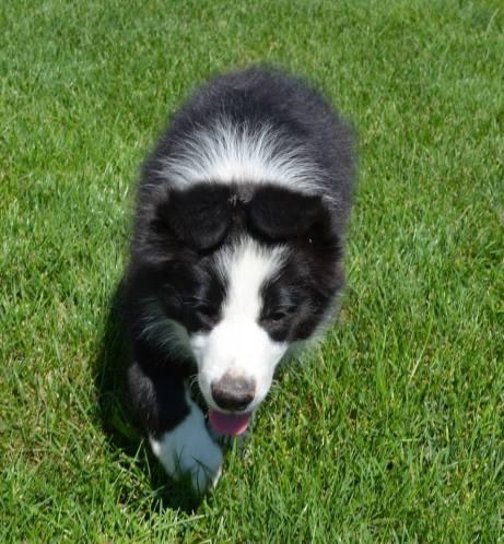 Puppy Trey