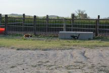 Working ducks