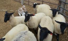 Sorting the sheep in training