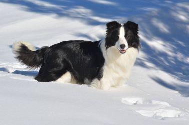 Loves snow