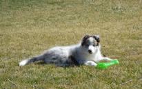 puppy-jessy