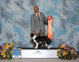 BCSA 2015 Natioals 4-6 Month BOB